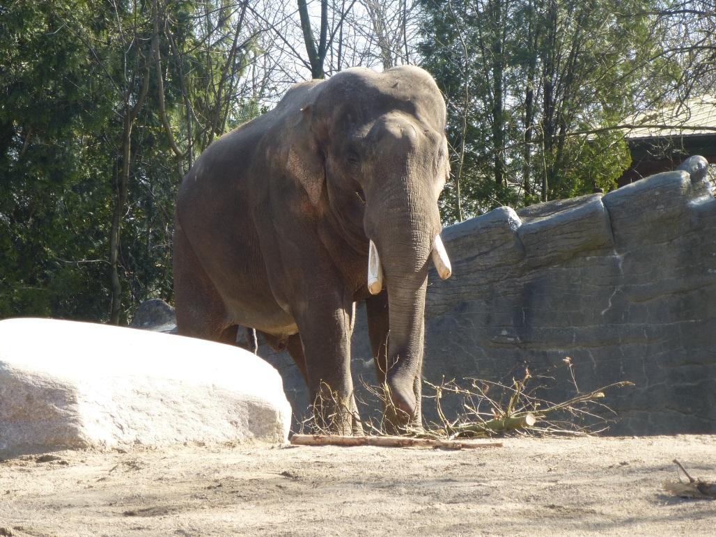Die Klasse 1b zu Besuch im Tierpark Hagenbeck